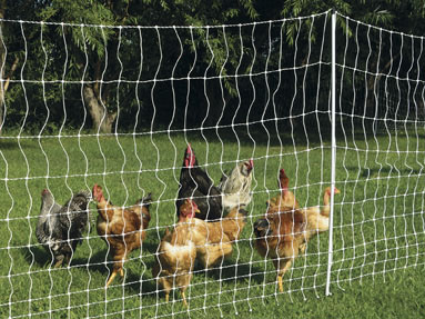 Poultry electric netting for chicken-Security electric fence
